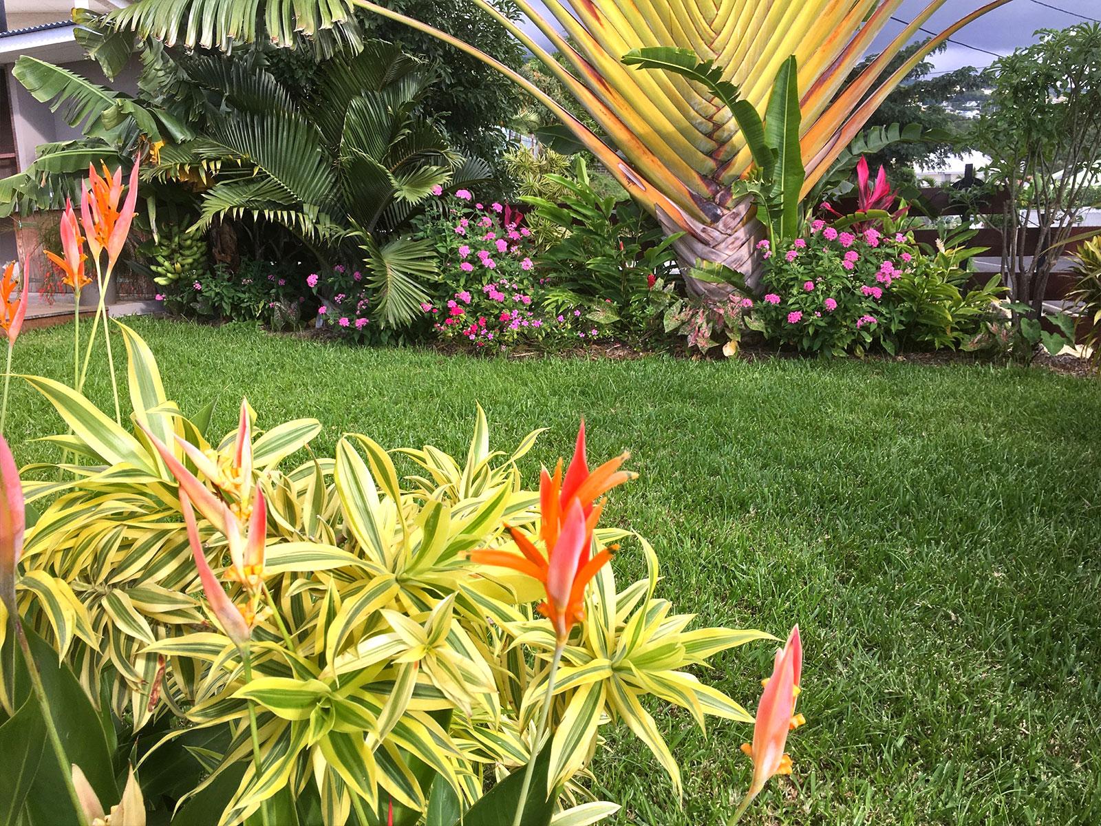 Cr ation de jardins sur l 39 le de la r union for Entretien jardin reunion