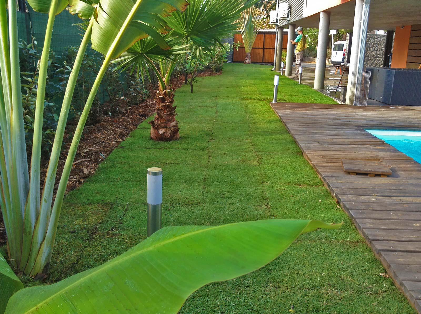 Cr ation et entretien de jardins sur l 39 le de la r union for Entretien jardin ile de la reunion
