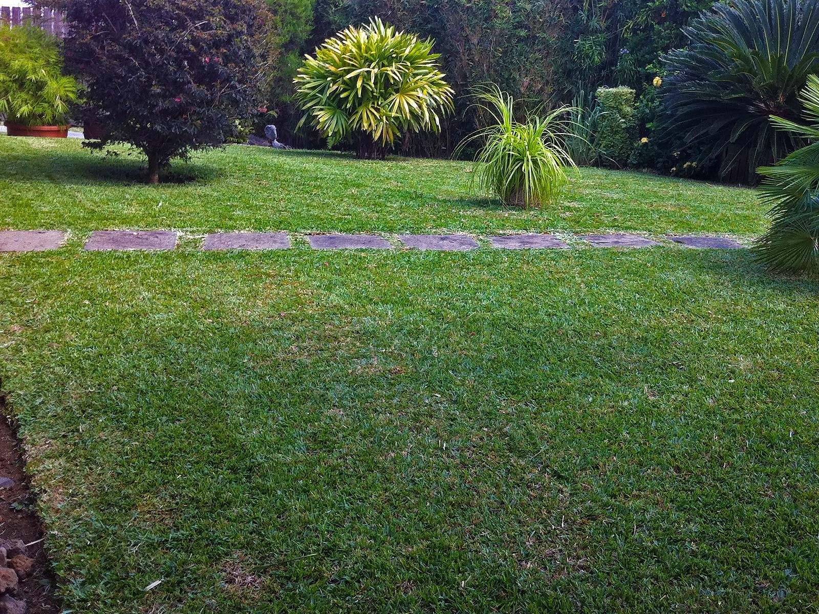 Entretien de jardin et espaces vert sur l 39 le de la r union for Entretien jardin ile de la reunion